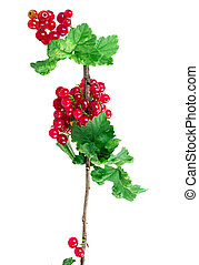 currant isolated on white background