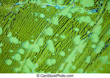 Algae pattern - A background texture image of bright green...