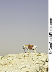 donkey - A donkey looking horizon atop a hill