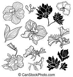 Floral design elements - Set of black floral design elements...