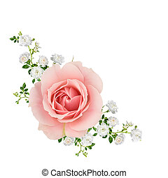 Pink and white roses isolated