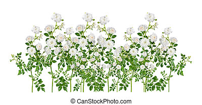White rose sprays, arranged