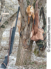 Dead fox on the tree while hunting