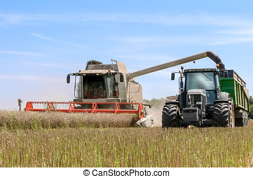 harvesting - harvester overturning cereals in a tractor...