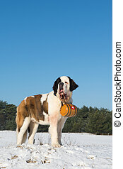 Rescue dog with barrel - Rescue dog with wooden barrel