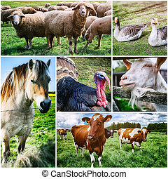 Agricultural collage with various farm animals
