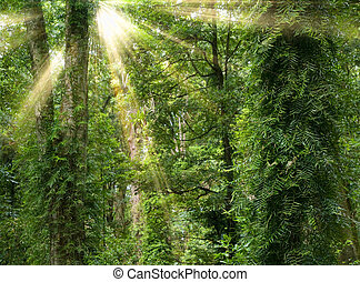 sunshine in rain forest - great image of light rays in the...