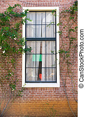 Vintage window surrounding by climber tree with white...