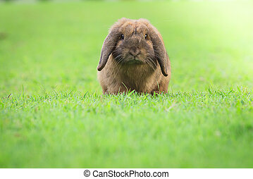 rabbit - Wild rabbit in the nature