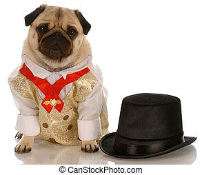 pug dressed up in formal wear with top hat