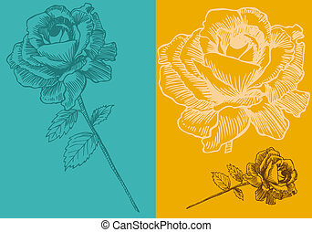 Teal Rose Drawing Background