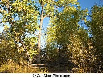 Trees and Rustic Fence - Trees and rustic fence in open...