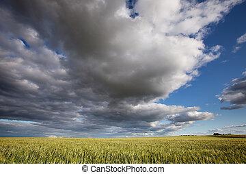 Prairie Landscape - A prairie landscape with a dramatic...