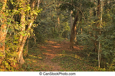 foot path in dense forest