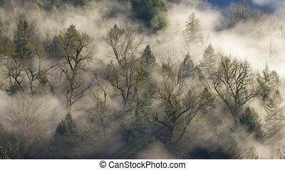 Timelapse of Moving Fog 1080p