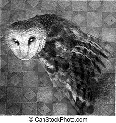 Owl - Photo based Mixed Medium image of a Barn Owl with a...