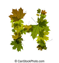 letter H from green maple leaves