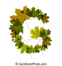 letter G from green maple leaves