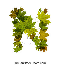 letter N from green maple leaves