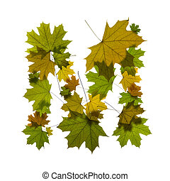 letter M from green maple leaves