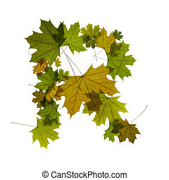 letter R from green maple leaves