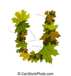 letter U from green maple leaves