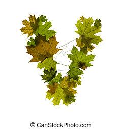 letter V from green maple leaves