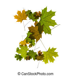 letter Z from green maple leaves