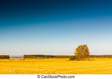 Autumn In The Fields 2
