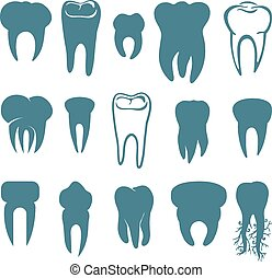 Human teeth set isolated on white background