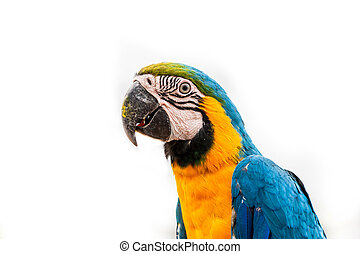 Parrot on white background - Colorful macaw parrot on a...