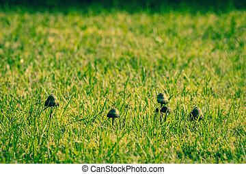 Photo de stock de champignons pelouse large for Pelouse tarif