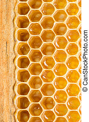 Honey cells. - Close up view of the honey cells.