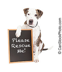 Pit Bull Dog Holding Rescue Sign
