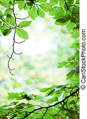Fresh green birch tree leaves in springtime forest