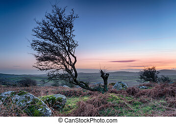 Moorland Sunset - A gnarled old hawthorn tree at sunset on...