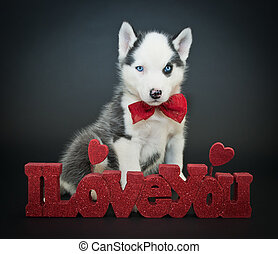 Valentine's Day Puppy - Cute Husky puppy sitting with an I...
