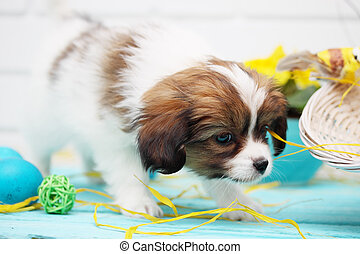 puppy playing - Easter still life, puppy playing with eggs