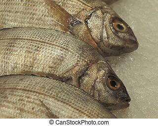 round fish doraden  - round fish