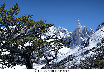 Los Glaciares National Park - Close-up view of a tree with...