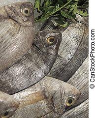 fish - round fishes, doraden