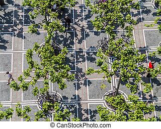 Zeil in Frankfurt with plane trees
