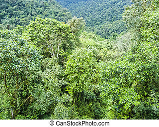 green rainforest jungle area in the national park in Brazil
