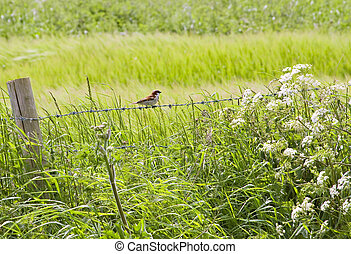 Hedgerow - Traditional English hedgerow running along the...