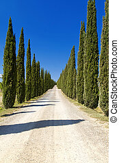 Montalcino - Cypress Trees rows and a white road rural...