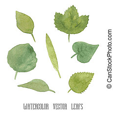 Set of green watercolor leaves - Vector set of green...