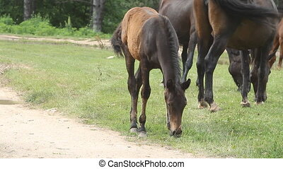 Horse grazing on pasture and eating green grass
