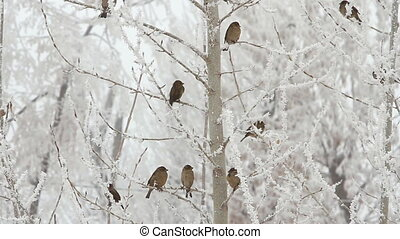 Birds on a tree over sky at winter day