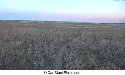 Pan of Dog Moon in Background - Pan of dog where moon in...
