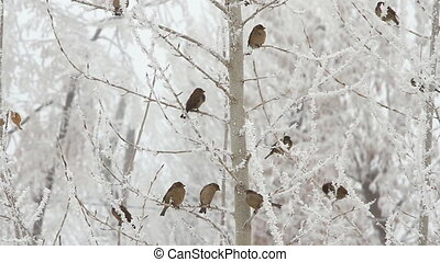 Birds on a tree over sky at winter